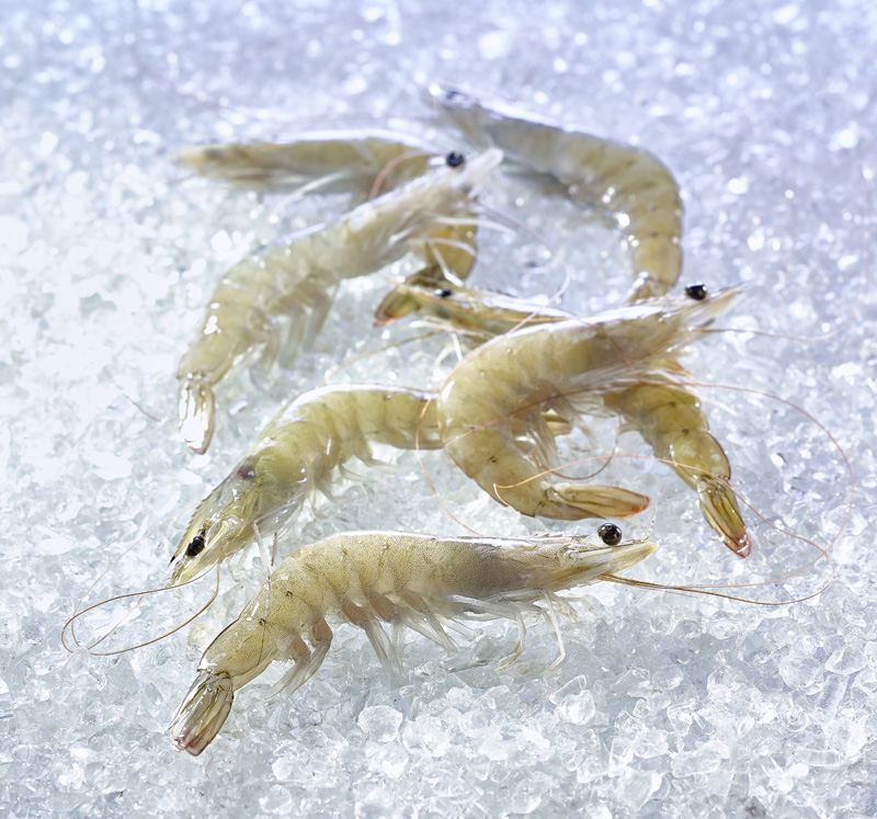 organic shrimps