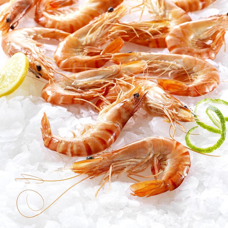 crevettes cuites réfrigérées